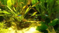 Pflanzen im Aquarium Eheim ScubaCube 64 (existiert nicht mehr)