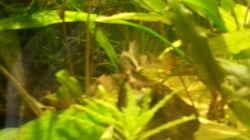 Besatz im Aquarium Eheim ScubaCube 64 (existiert nicht mehr)
