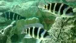 Aquarium Becken 30929