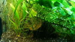 untere Beckenregion- Mangrovenwurzel
