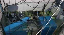 Filterbecken
