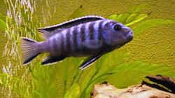 Besatz im Aquarium Becken 31