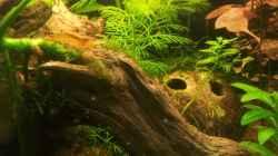 Besatz im Aquarium Garnelen