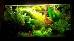 Aquarium Garnelen