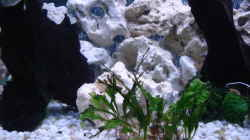 Dekoration im Aquarium Becken 3101