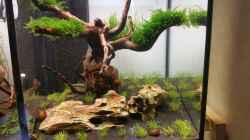 Dekoration im Aquarium The Diy