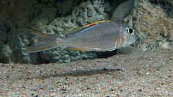 Besatz im Aquarium Becken 31060