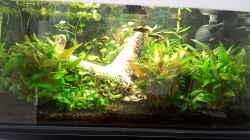 Aquarium Becken 31065