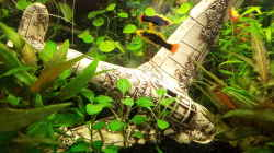Dekoration im Aquarium Becken 31065