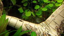 Pflanzen im Aquarium Becken 31065