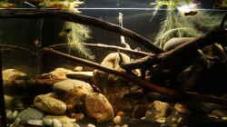 Aquarium Platy Biotop