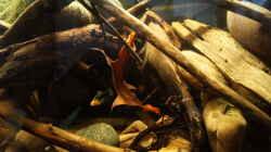 Dekoration im Aquarium Platy Biotop