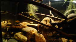 Dekoration im Aquarium Platy Biotop