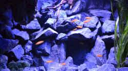 Aquarium Mein Malawi-Delta