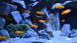 Besatz im Aquarium Mein Malawi-Delta