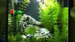 Aquarium Nano Becken