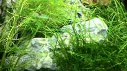 Besatz im Aquarium Nano Becken