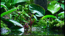 Pflanzen im Aquarium Two Worlds Nur noch als Beispiel