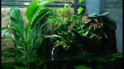 Aquarium Two Worlds Nur noch als Beispiel