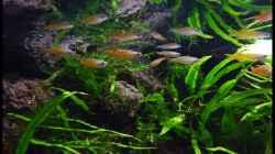 Besatz im Aquarium Two Worlds Nur noch als Beispiel