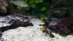 Aquarium Becken 31136