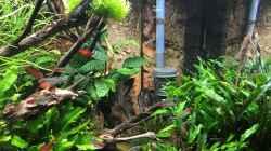 Pflanzen im Aquarium Wild World(Restart)