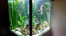Aquarium Südamerikawürfelchen....