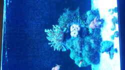 Aquarium Riff im Wohnzimmer