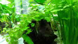 Pflanzen im Aquarium White Sands