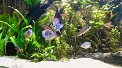 Aquarium Amazonas Gesellschaftsbecken
