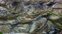 Rückwand als natürliches Habitat für Felsenbewohner