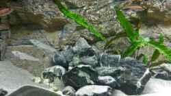 Gruppenbild verschiedener Fische und Einrichtungen