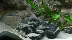 Gruppenbild von Felsen-, Sand- und Höhlenbewohnern
