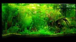 Aquarium Jungle Underwater