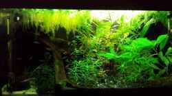 Aquarium Salmlerwelten (umgebaut zur Amerika Räuberwelt))