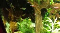 Dekoration im Aquarium Salmlerwelten (umgebaut zur Amerika Räuberwelt))