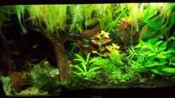 Besatz im Aquarium Salmlerwelten (umgebaut zur Amerika Räuberwelt))