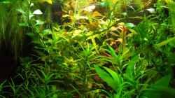 Pflanzen im Aquarium Salmlerwelten (umgebaut zur Amerika Räuberwelt))