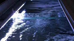 Beleuchtung leicht schräg ins Aquarium gerichtet