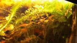 Pflanzen im Aquarium Becken 3127