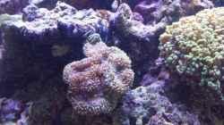 Besatz im Aquarium minireef