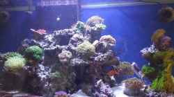 Aquarium minireef
