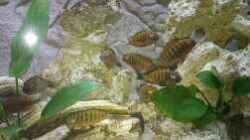 Besatz im Aquarium Becken 31313