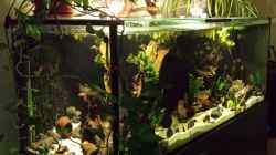 Aquarium Southamerican wood