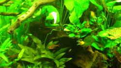 Aquarium Grünes Juwel