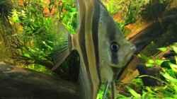 Besatz im Aquarium Becken 31356