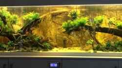 Aquarium Becken 31356