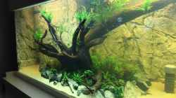 Dekoration im Aquarium Becken 31356