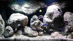 Aquarium Big Rock Mbuna