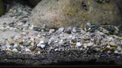 Bodengrund aus Flusssand, Sansibar black, Flusskieseln und kleinen Muscheln bzw.